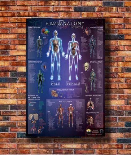 W015 Art Human Anatomy Interactive Body Wall Chart 30 24x36in Poster Hot Gift