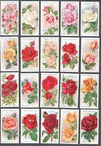 1912-Wills-s-Cigarettes-Roses-A-Series-Tobacco-Cards-Complete-Set-of-50