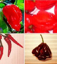 Weltrekord-Chilli-Set ❅ Schärfste Chilischoten der Welt ❅ Zimmerpflanzen ❅ Samen