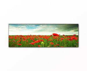 Mohnblumen-Wiese-als-Kunstdruck-Panorama-Bild-auf-Leinwand-gerahmt-XXL-Druck