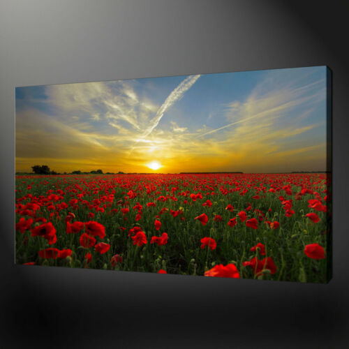POPPY FIELD SUNSET CANVAS PRINT PICTURE WALL ART HOME DECOR FREE FAST DELIVERY