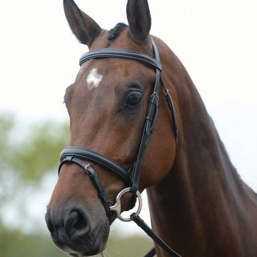 Kincade Flash Bridle brown pony
