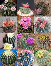 FEROCACTUS MIX rare flowering cactus exotic cacti desert succulent seed 20 seeds