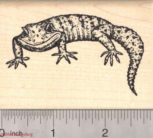 Leopard Gecko Rubber Stamp Lizard K3118 WM