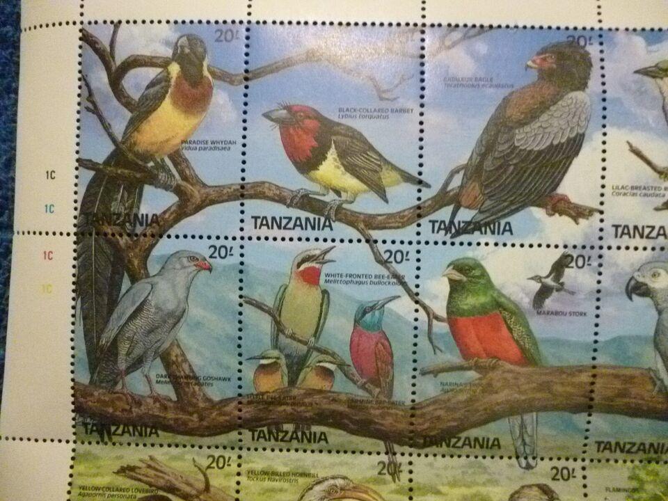 Afrika, ustemplet, Fugle