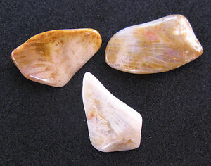 3pcs-Fossilized-Palm-Tree-Gemstone-NATURAL-Mineral-Fossil-Crystal-Petrified-Wood