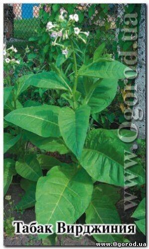"Tobacco seeds /""Virginia /"" 0.05 grams S0026 Farmer/'s dream"