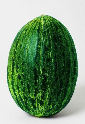 Squash Seed 8 Seeds Cucurbita Moschata Pumpkin Melons Vegetable Garden Seed B058