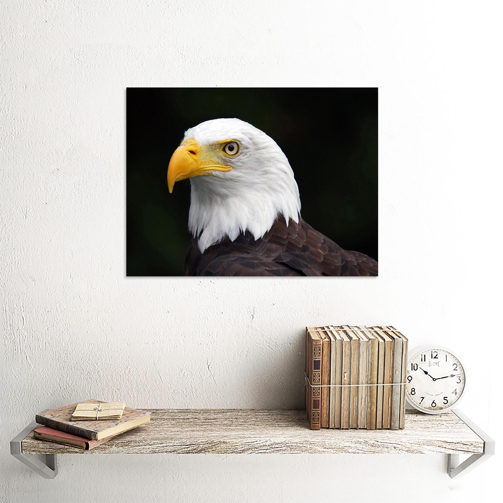 AMERICAN BALS EAGLE BIRD PORTRAIT PHOTO ART PRINT POSTER PICTURE BMP1750B