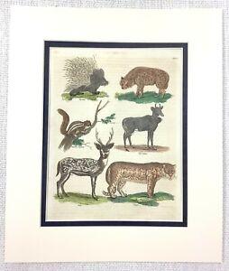 1816 Antico Mano Colorato Incisione Axis Deer Porcupine Buffon Naturale Storia