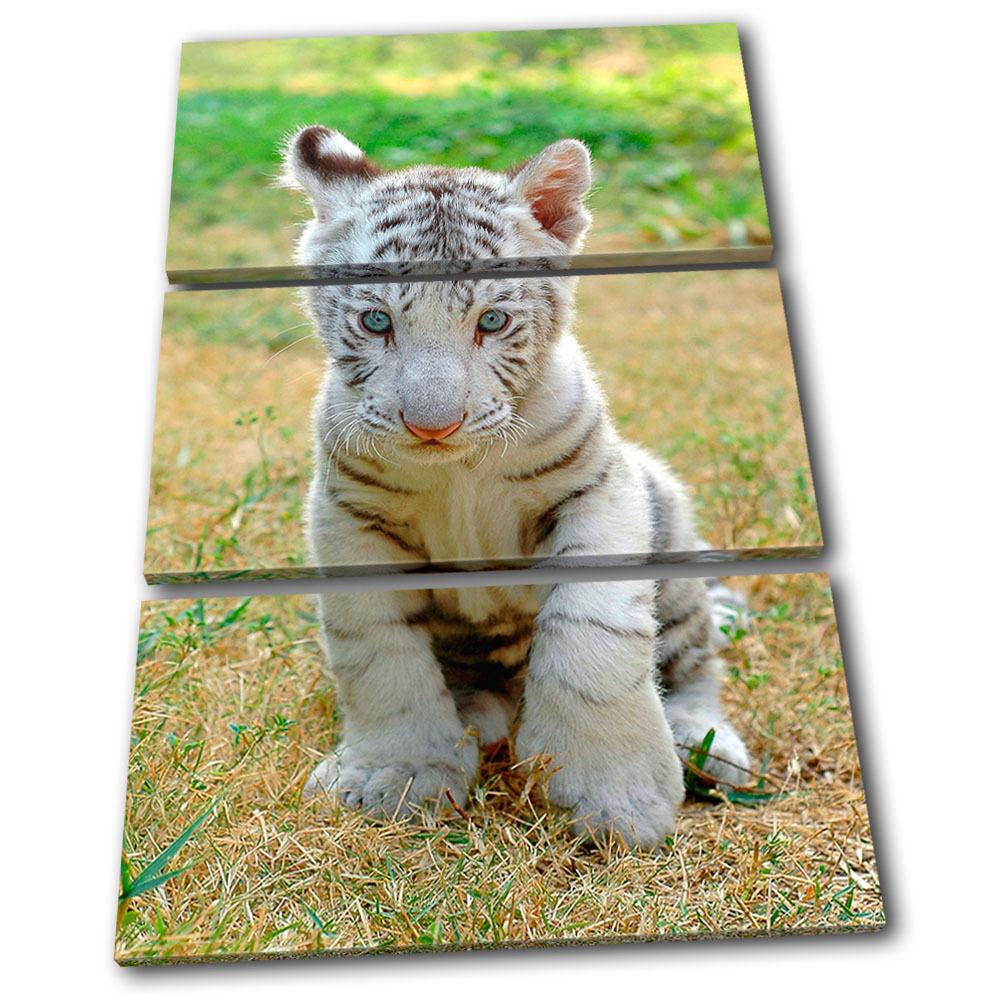 Baby Weiß Tiger Animals TREBLE Leinwand Wand Kunst Bild drucken