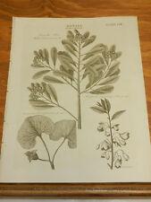 1817 Antique Print/BOTANY//TYPES OF CLASS 11 DODECANDRIA PLANTS, WHITE CINNAMON