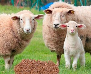 Dünge Pellets aus Schafwolle Schafwollpellets Dünger 1 kg