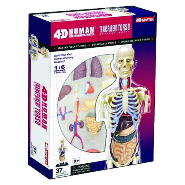 4d Master Transparent Human Anatomy Torso Model Kit One Color