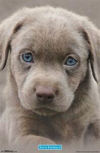 Best Puppy Blue Eye Adorable Dog - s-l300  Gallery_551911  .jpg