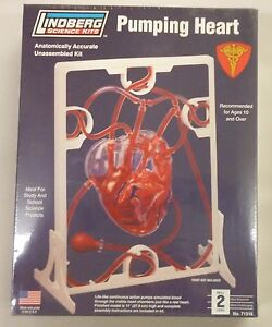 Lindberg Human 11.5 Inch Pumping Heart Anatomy Science Project Model ...