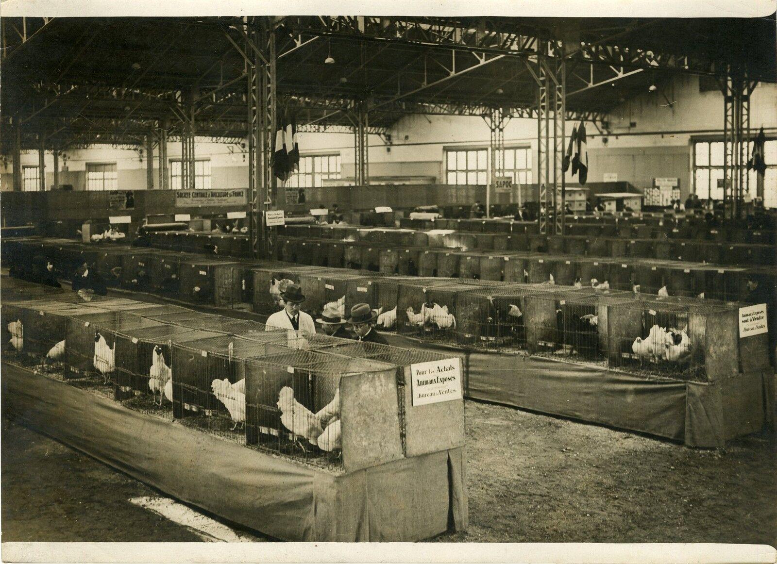 EXPOSITION D'AVICULTURE (PARIS 1931)  Photo originale G. DEVRED   Agce ROL