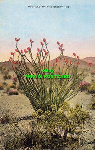 R603333 Ocotillo on the Desert. E. C. Kropp