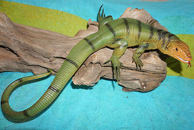 Realistic PVC Young Brown Desert Monitor Lizard Replica