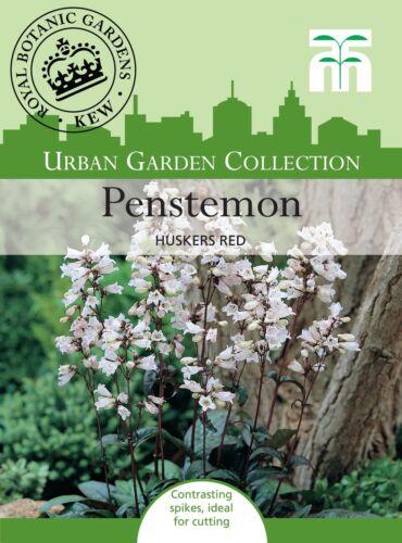 Penstemon Huskers Red 35 Seed Thompson /& Morgan Urban Garden Flowers