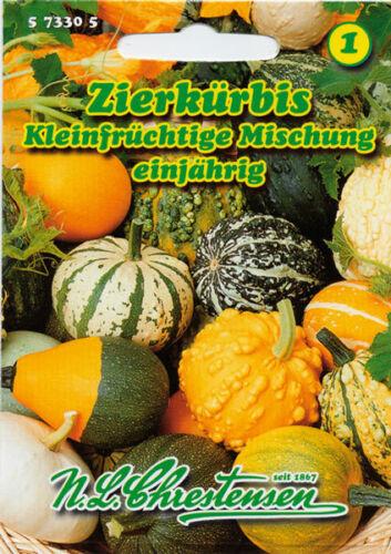 Esotica kleinfrüchtige misch. verdura 573305,nlc 1 Chrestensen Cucurbita Pepo