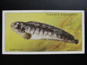 N-37-Cat-Fish-Mar-Peces-John-Player-amp-Sons-1935