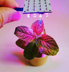Lampada UV led MODULO 12V  per idroponica crescita piante serra ARDUINO Hobby