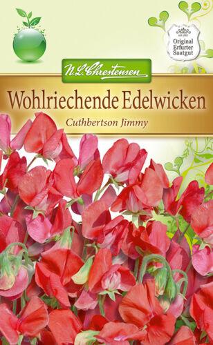 Edelwicke/' Cuthbertson Jimmy /' circa 50 Semi Veccia Rosso Lathyrus Odoratus