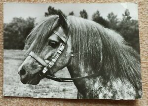 Pferdepostkarte-AK-Pferde-Pferdepostkarten-Planet-Verlag-DDR-1980