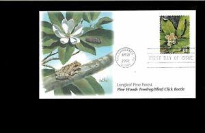 2002-FDC-Longleaf-Pine-Forest-3611h-Treefrog-Beetle-Tallahassee-FL