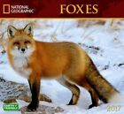 National Geographic Foxes by Wall Book (english)