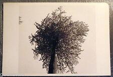 Carte postale Tuna Ciner Eilenriede 1981 , arbre  postcard