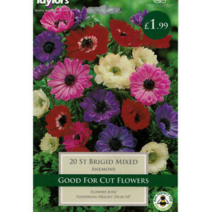Anemone St Brigid Mixed Bulbs By Taylors - <span itemprop='availableAtOrFrom'>Freuchie, fife, United Kingdom</span> - If you are not completely satisfied with your purchase from Gardenbridgend we offer a full money back guarantee. Please notify us within 7 days of your delivery and upon receiving  - Freuchie, fife, United Kingdom