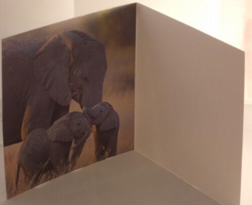 Elephants Lenticular 3D Blank Greeting Card 16cm x 16cm