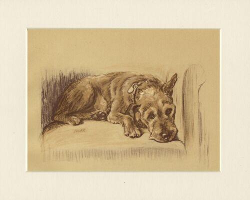 IRISH TERRIER LOVELY 1930/'S DOG ART PRINT by MAC LUCY DAWSON READY MOUNTED