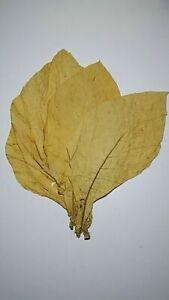 Feuilles-de-Tabac-Blond-de-Virginie