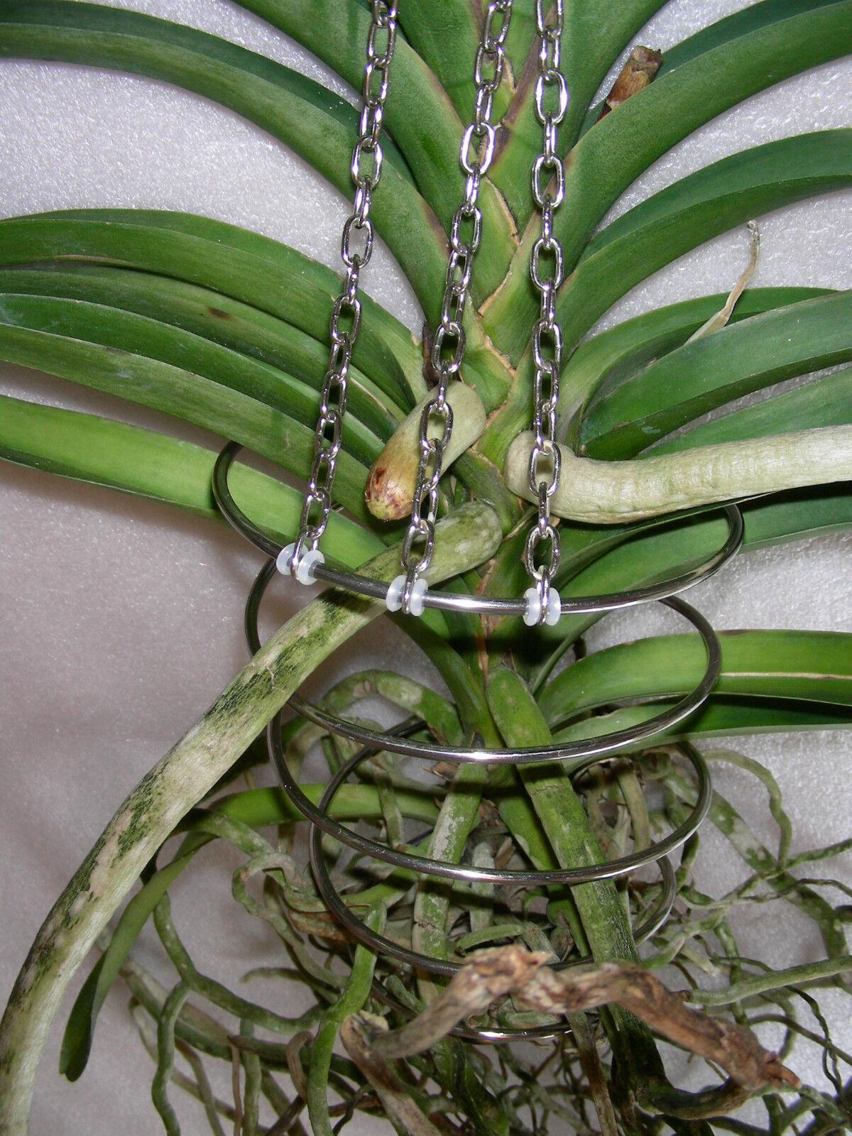 orchidee vanda aufhangen