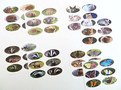 Butterflies Outline Sticker 1.3410 gl//gl