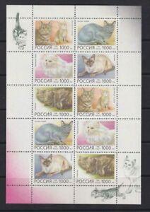 Russia 1996 domestic animals cats klb MNH