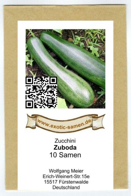 Zucchini - Zuboda - 10 Samen