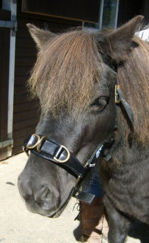 MINI Shetland Shetland//Small pony and Pony Size Lunge Cavesson Leather//Webbing