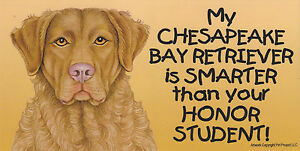 My CHESAPEAKE BAY RETRIEVER is SMARTER than your HONOR STUDENT car MAGNET 4X8
