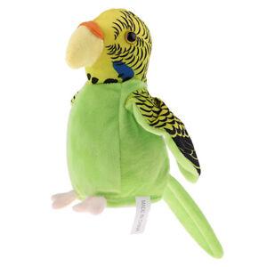 Schöner Blauer Sprechender Papagei Wiederholt Vogel Sprachtonaufzeichnungs