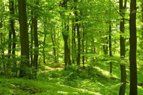 Photo murale-Forêt non tissé-Nature-Vert Bois Papier Peint Panorama 501 V