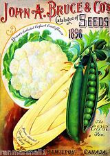 1898 Bruce's Cauliflower Vegetables Seed Packet Catalogue Advertisement Poster