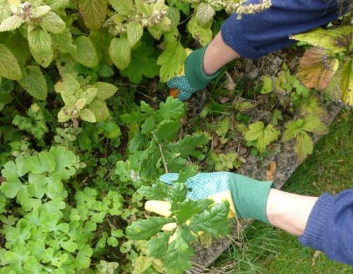 2  Pairs Ladies Water Resistant Cotton Gardening Garden Gloves PVC Dotted Palm