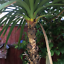 Novelty-Resin-Garden-Tree-Hugger-Peeker-Animal-Fairy-Ornament-Outdoor-Fence-Shed thumbnail 13