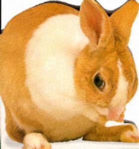 Bunny-Snapshot-Shaped-Board-Books-ExLibrary