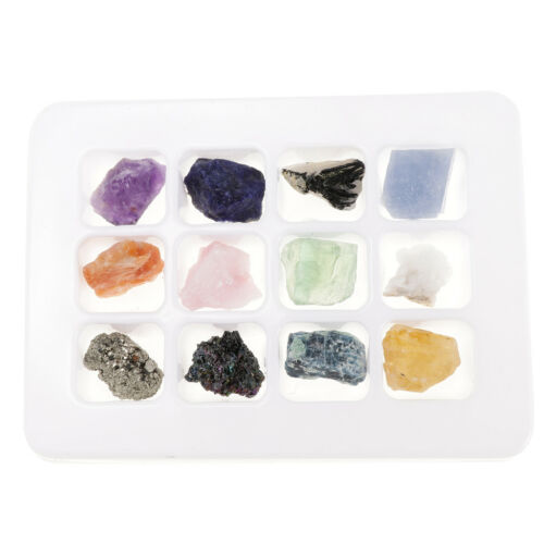Educational Geology Collection of Rocks /& Minerals Kids Science Toy PK546-5