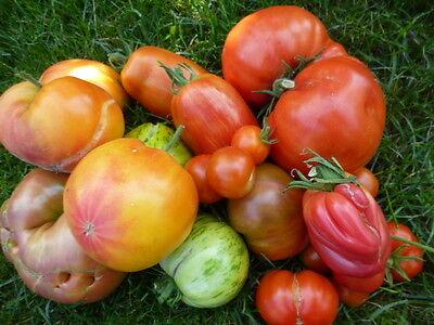 7 Sorten bunt-gemischt Tomatensamen ALTE SORTEN Saatgut Tomaten 20 Korn  T2